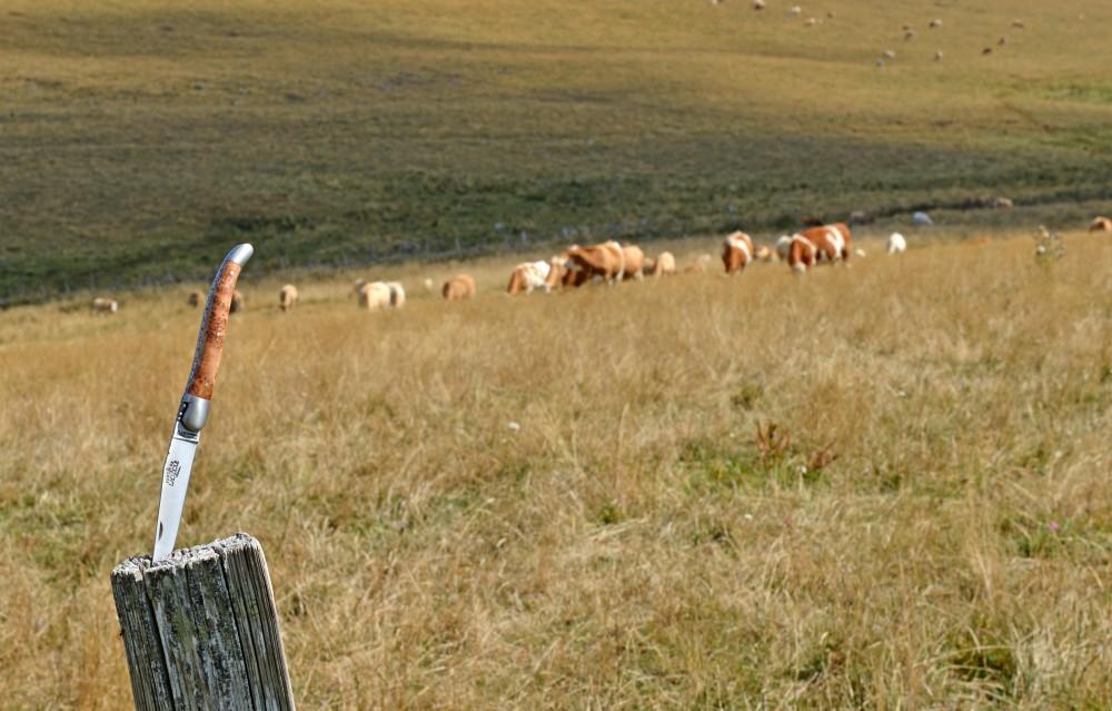 Ronde des Fromages: la Forge de Laguiole sur les Traces