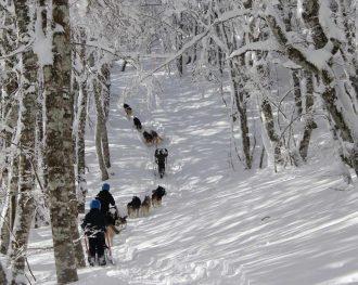 Laguiole en hiver, des mushers et des pliants…
