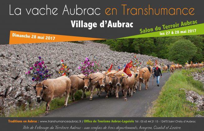 Ascension en Aubrac, la transhumance sur un plateau