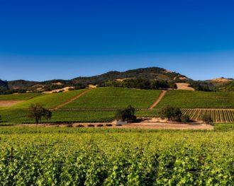 Terroirs de Légende, à la conquête de l'ouest… les vins Californiens