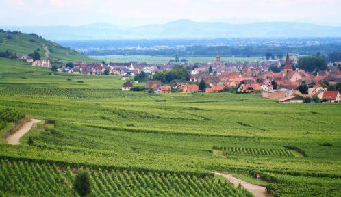 Riesling, plus grand vin blanc du monde